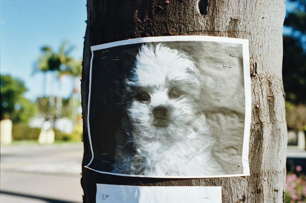 Encontrei um animal perdido