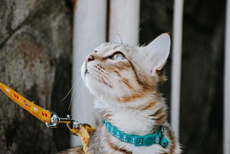 Blog sobre Gatos