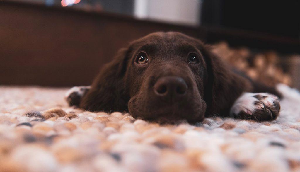 O cão mais fofo