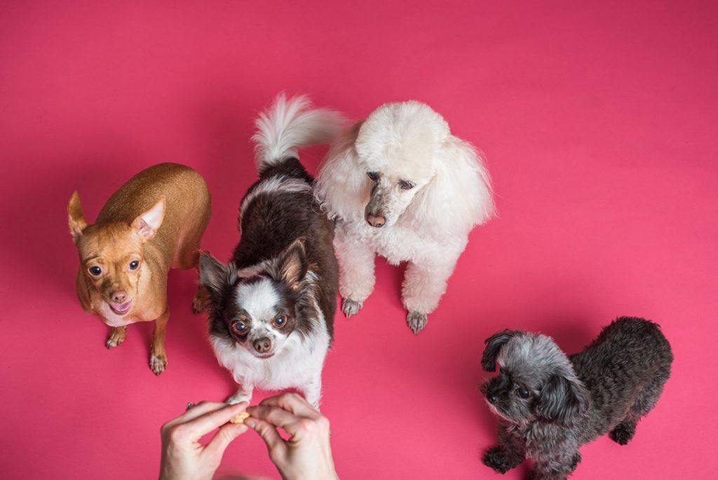 Quantas raças caninas existem no mundo